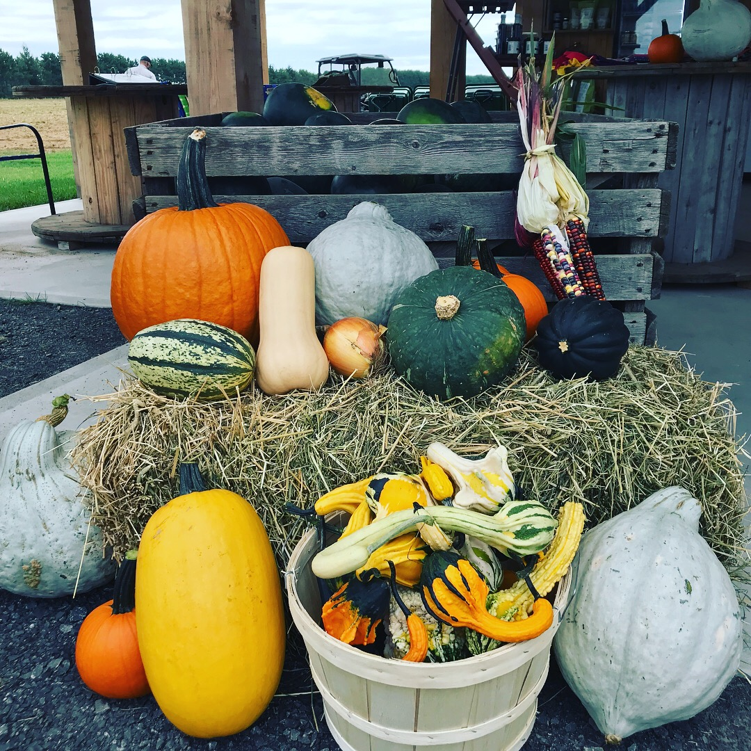 Pumpkins and squash at Bleuetière Asselin