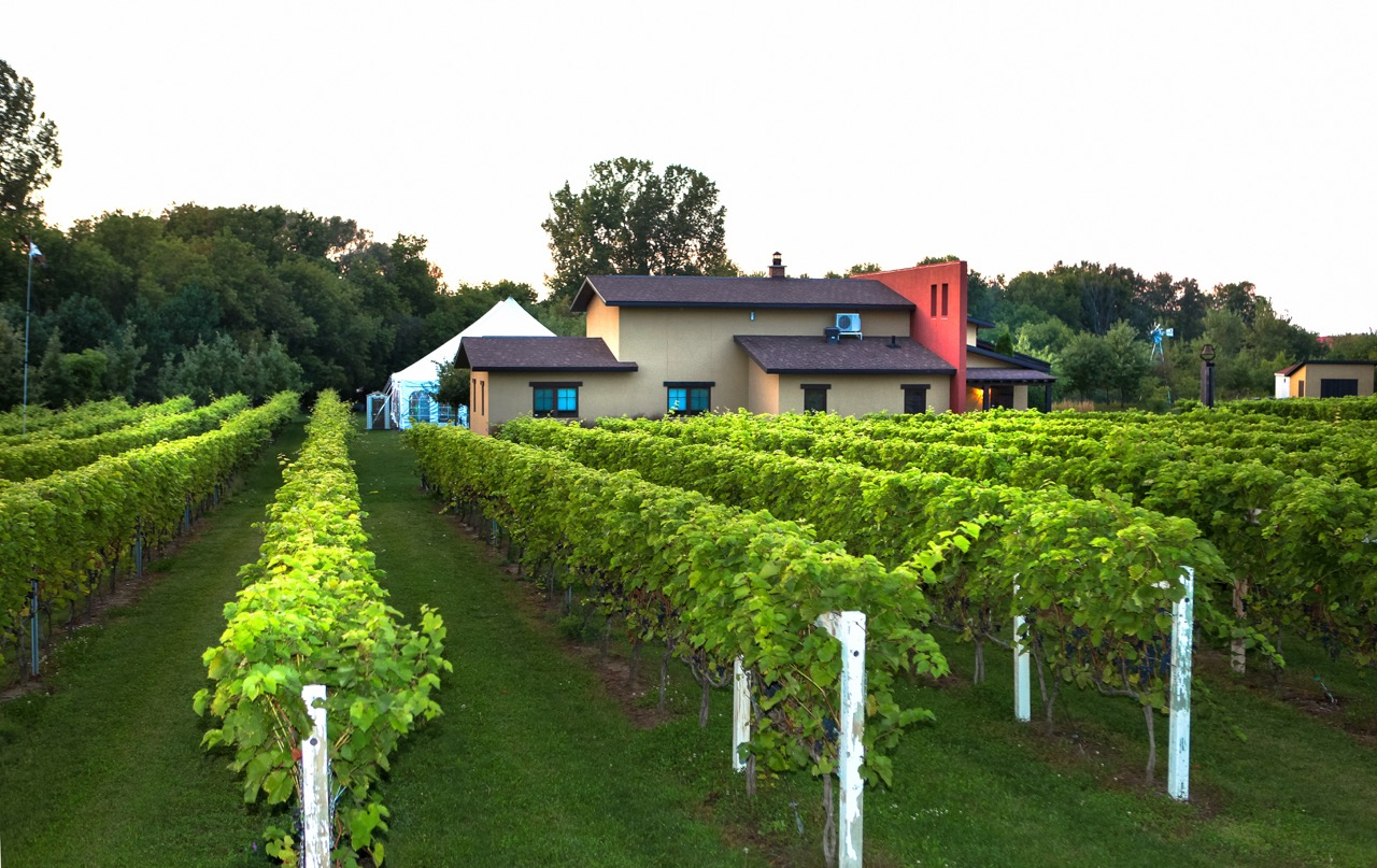 Vignole Saint-Thomas