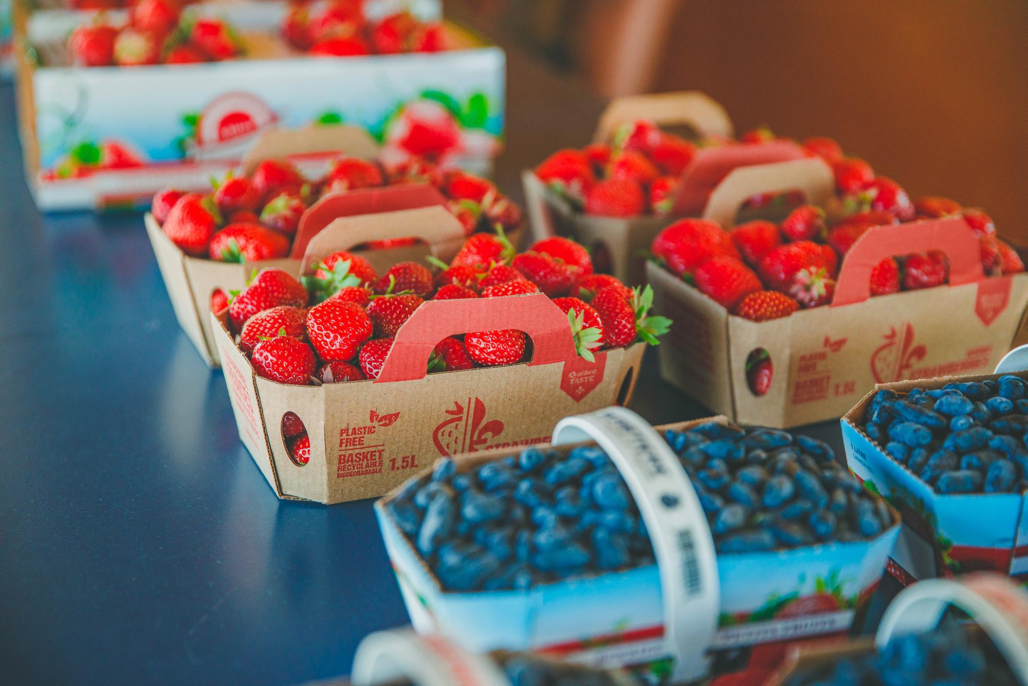 Autocueillette de bleuets et de fraises
